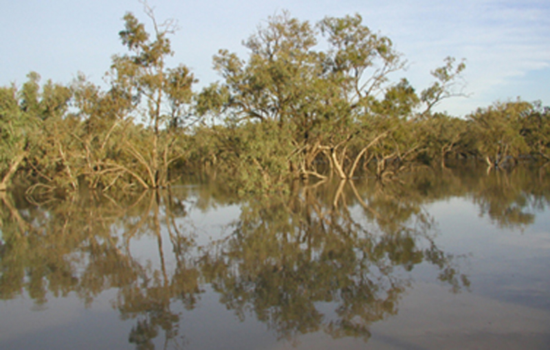 the flooded Barwon River at Walgett December 2004